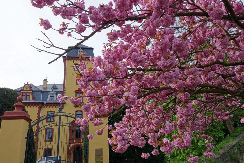 30 Jahre ZEN – das ZEN Zentrum im Schloss Wachendorf begeht Jubiläum